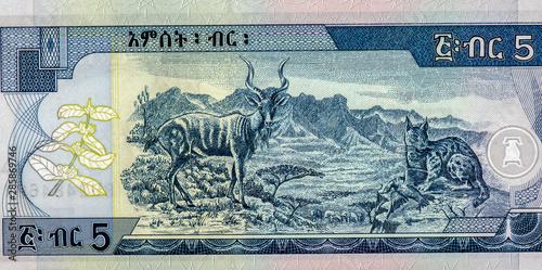 Fotografia  Kudu; Caracal; Semien Mountains
