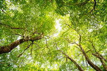 Looking Up In A Green Tree For...