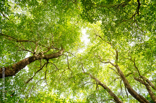 looking-up-in-a-green-tree-forest-at-sunny-summer-day