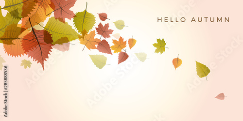 Autumn sale background, layout decorate with leaves of autumn Canvas-taulu