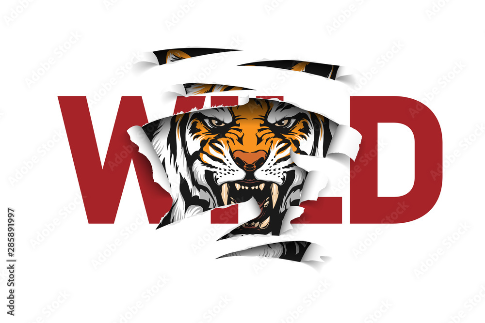 Fototapeta wild slogan ripped off with tiger