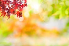 가을꾸미기 카피공간 배경