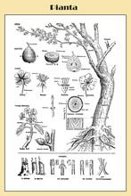 Fruit Tree Illustrated Botanic...