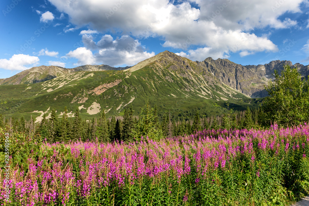 Fototapety, obrazy: View of the Tatras mountains and colorful flowers in Gasienicowa valley.
