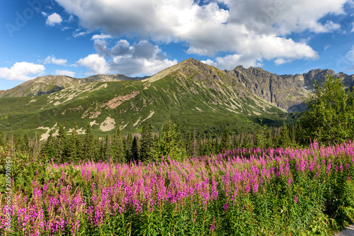 Obraz View of the Tatras mountains and colorful flowers in Gasienicowa valley. - fototapety do salonu
