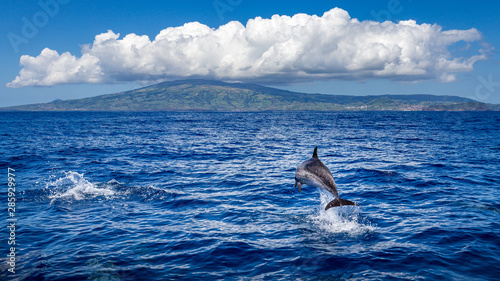 Cadres-photo bureau Dauphin Dolphin jumping out of the water, island of Faial (Azores) in the background.