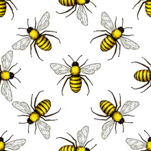 Bee Vector Seamless Pattern. Hand Drawn Insect Background.