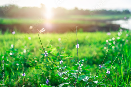 Spoed Fotobehang Weide, Moeras Dragonfly on the grass flower in the green field with sunlight