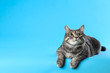 canvas print picture Cute gray tabby cat on light blue background, space for text. Lovely pet