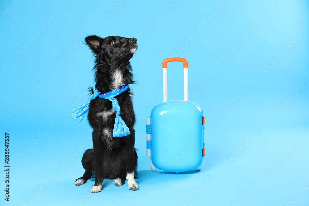Fototapety, obrazy: Cute dog with scarf and small suitcase on blue background