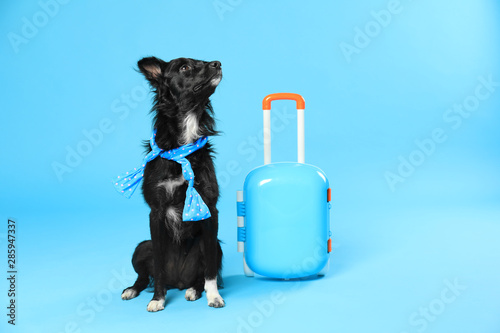Fotografía  Cute dog with scarf and small suitcase on blue background