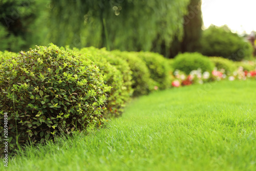 Obraz Picturesque landscape with beautiful green lawn on sunny day. Gardening idea - fototapety do salonu