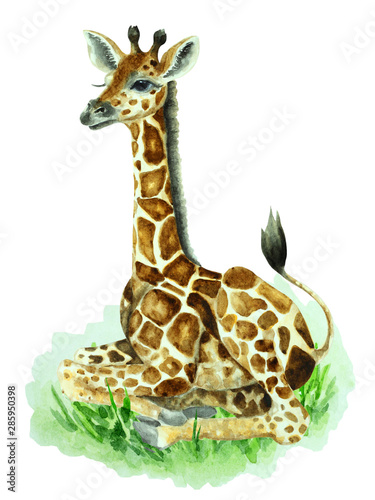 Photo  Baby giraffe sitting on grass on a white background, hand drawn watercolor