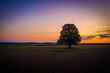 canvas print picture - Einzelner Baum auf dem Feld bei Dämmerung