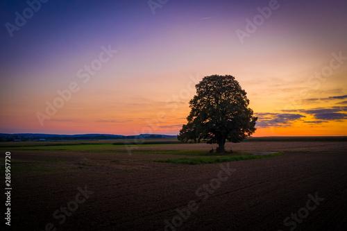 pojedyncze-drzewo-w-polu-przy