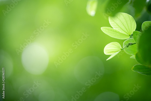 Montage in der Fensternische Pistazie Closeup nature view of green leaf on blurred greenery background in garden with copy space using as background natural green plants landscape, ecology, fresh wallpaper concept.