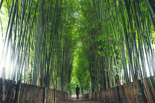 Foto auf AluDibond Bambus Bamboo The bamboo pathway is a tunnel