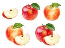 Apple Set Watercolor Illustration Isolated On White Background