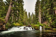 Long Exposure Of A Small River And A Short Waterfall Over Mossy Rocks Between Tall Evergreen Trees In Oregon