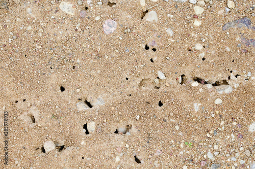 Traffic and entry caves of an anthill on the gravel footpath by home Wallpaper Mural