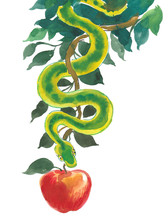 Snake And Apple. Ink And Water...