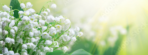Photo Stands Lily of the valley Lily of the valley (Convallaria majalis), blooming spring flowers, closeup with space for text