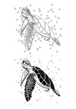 Graphic Sea Turtle,vector Illu...