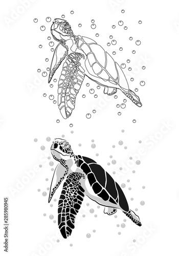Cuadros en Lienzo graphic sea turtle,vector illustration of sea turtle