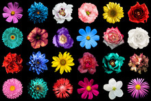 Mega Pack Of Natural And Surreal Blue, Orange, Red, Turquoise, Yellow, White And Pink Flowers Isolated On Black. High Quality Detailed Photo