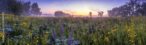 Fototapeta Twilight on a field covered with flowers in summer morning with fog. obraz