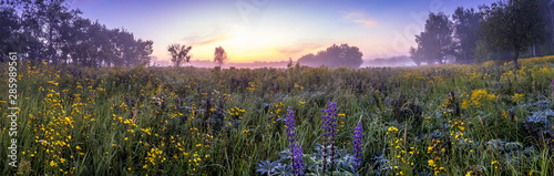 Twilight on a field covered with flowers in summer morning with fog. - 285989561