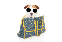 Dog Going On Vacations Inside Of A Vintage Back Pack Suitcase Wearing Sunglasses. Isolated On White Background.
