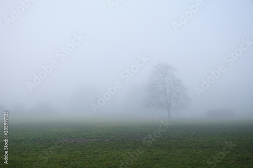 Foggy winter day in a park with lone tree in the foreground #285997135