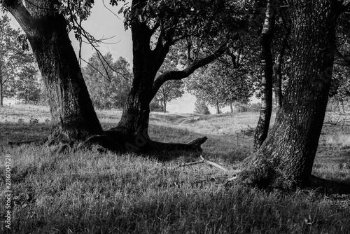 Türaufkleber Darknightsky Nature life outdoors