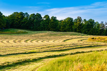 Pattern Of Cut Hay On A Warm Late Summer Afternoon.