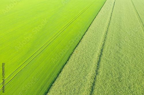 Papiers peints Vert chaux Champs de lin et de colza vue aérienne oblique à moyenne altitude
