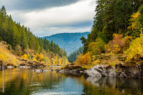 Fall colors of orange and yellow leaves in a calm section of the rogue river with pine trees on the left and the river gently winding to the right