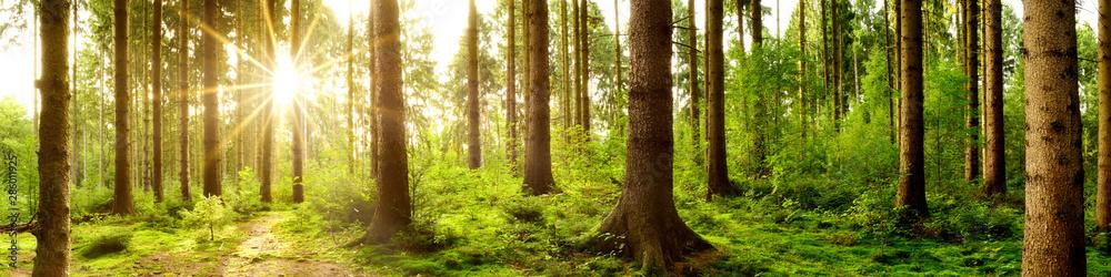 Fototapeta Wald Panorama im Licht der aufgehenden Sonne