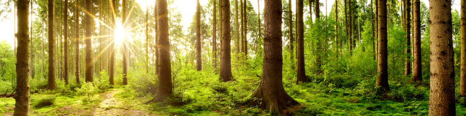 Wald Panorama im Licht der aufgehenden Sonne
