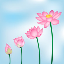 Vector Lotus Flowers Isolated On Blue Background Illustration, Yoga, Health Care