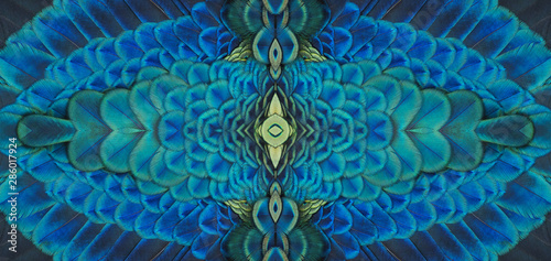 Foto op Aluminium Pauw Beautiful pattern abstract background texture made of colorful green peacock feathers (Green peafowl)