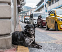 A Beautiful Stray Dog With Amb...