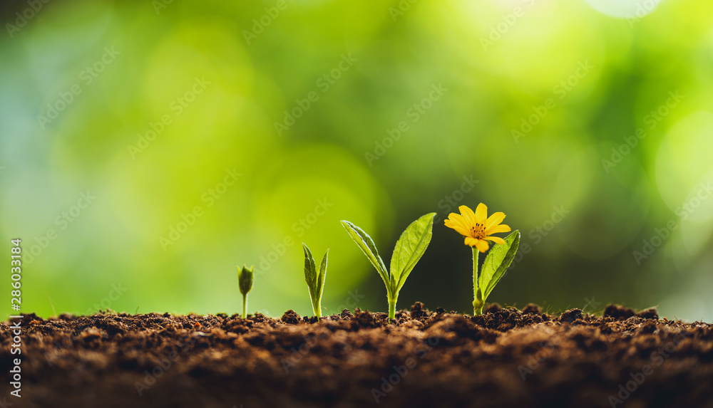 Fototapety, obrazy: Growth tree young plant Natural green background