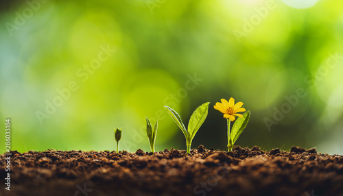 Spoed Fotobehang Bloemenwinkel Growth tree young plant Natural green background