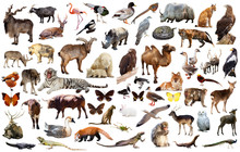 Animal Collection Asia
