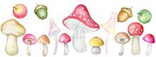Autumn Mushrooms, Acorns, Apples, Set Separately On White Watercolor