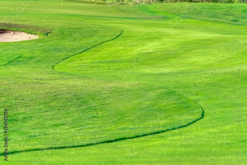 Fototapety, obrazy: Close up of the vibrant green fairway of a golf course viewed on a sunny day