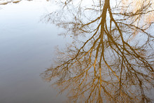 Reflected In A Puddle Of Inverted Tree Autumn