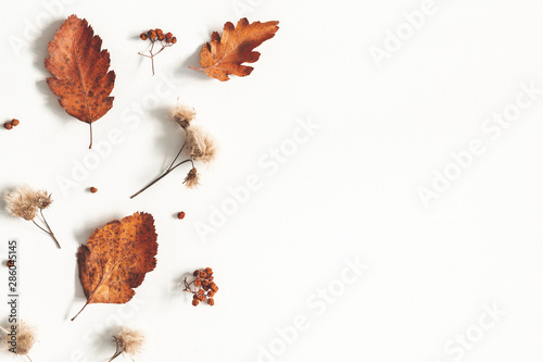 Autumn composition Canvas