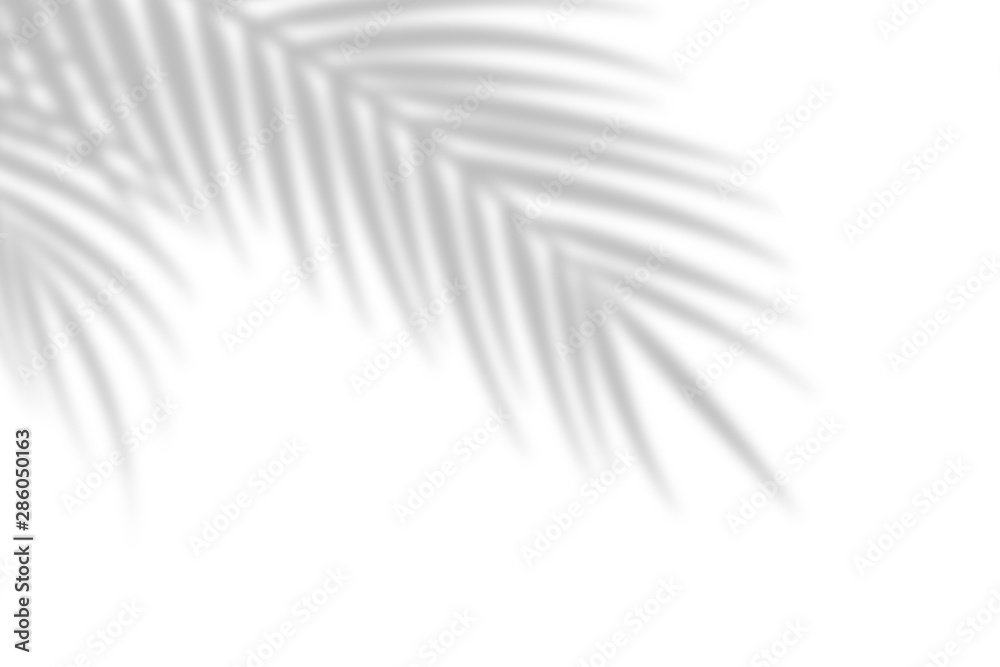 Fototapeta Shadow from palm leaves on a white wall background. White background, cardboard. Abstract image. Tropic concept